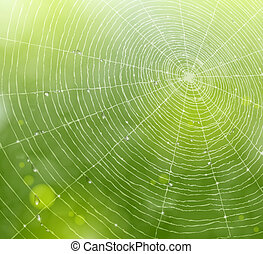 Web of natural background - Natural background with a spider...