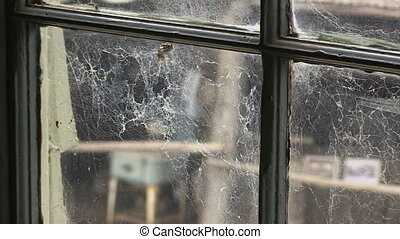 Web of spiders on window - A medium shot web of spiders on ...