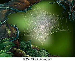 web, ragno, foresta pluviale