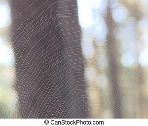 web spider wait prey
