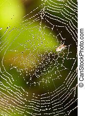 web, spin, het fonkelen, dauw bedekte, druppels