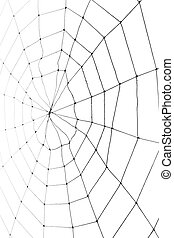 web, spin
