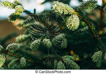 Web with dew drops on tree branches