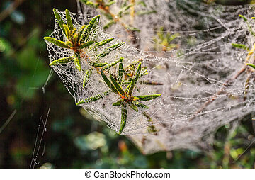 web with morning dew close up