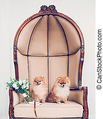 wedding bouquet and a pair of cute dogs sitting on the throne.