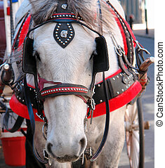 wedding horse - white horse pulling wedding carriage in...