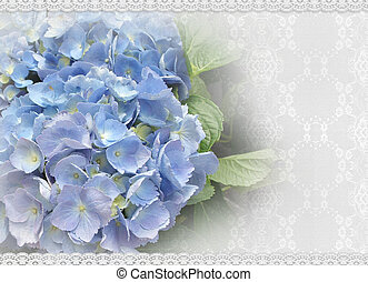 Wedding Hydrangea and lace - Image and illustration...
