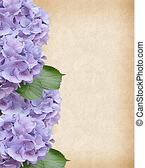 Image and illustration composition of beautiful lavender hydrangea flowers on parchment-look background for wedding, anniversary or special occassion invitation with copy space