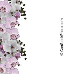 Wedding invitation Border orchids ivy