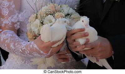 Wedding pigeons  HD