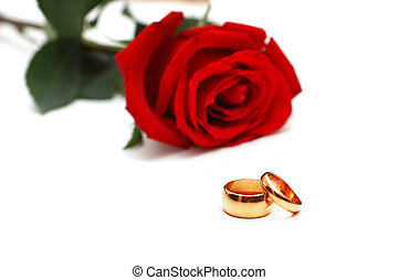 Wedding rings and rose at the background