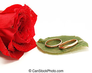 wedding rings and rose on white background