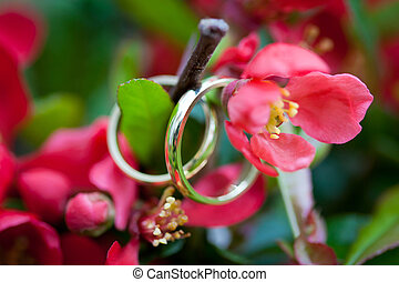 Wedding rings closeup with red wild flowers