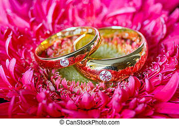 Wedding rings in red box on multi color flowers