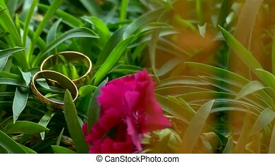 wedding rings lie on the green grass motion camera...