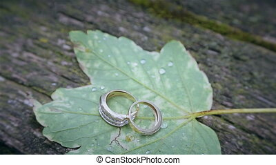 Wedding rings on a green leaf HD
