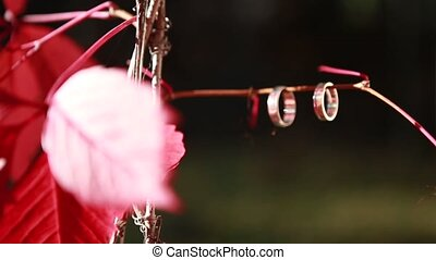 Wedding rings on a red tree