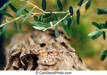 Wedding rings on a thread in the olive tree