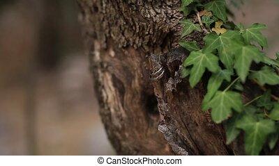 Wedding rings on a tree bark. Jewelry at wedding - Wedding...