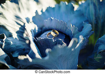 Wedding rings on blue cabbage
