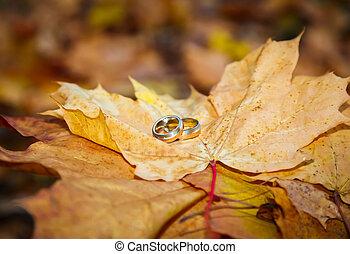 wedding rings on fall foliage