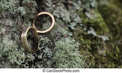Wedding Rings on the bark of a tree in a moss macro closeup gold diamon Jewellery
