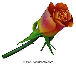 Wedding Rose 2-color