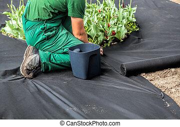Weed Barrier Sheet - Horticulturist installs special mat...