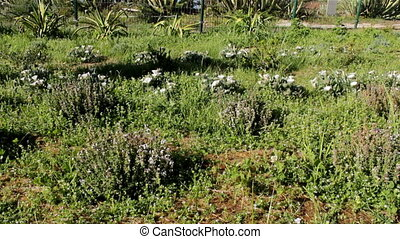 Weed Control Herbicide Spray - Ornamental garden recent...
