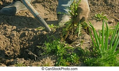 Weed control in a small garden with the help of fork
