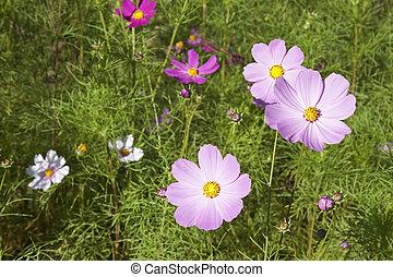 weed flowers in a garden