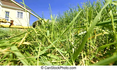 Weed trimmer working in the backyard, surface level
