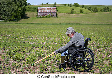 weeding in a wheelchair