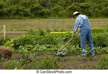 farmer in the garden weeding the plants