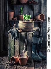 weefgaap (weefsprong, oud, houten, lente, closeup, bloemen