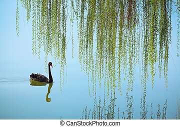 weeping willow and black swan