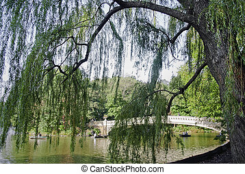 An over hanging weeping willow tree near the boat pond in Central Park.
