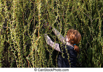 Weeping willow in early spring. Red-haired pruns pruning shears and too long hanging tree branches.