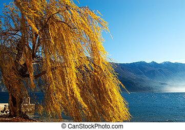 Weeping Willow - Lake