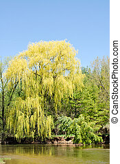 Weeping willow on blue sky