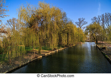 weeping willow on the shore of a lake in the park