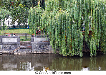 Weeping Willow tree at the waters edge