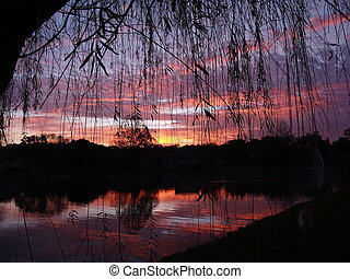 Weeping Willow Sunr