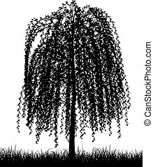 weeping willow tree - Silhouette of a weeping willow tree