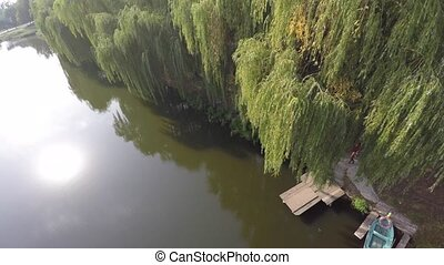 weeping willow trees reflected on a river. drone video.