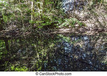 weerspiegeling bomen, meer