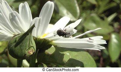 weevil - weevil at dinner