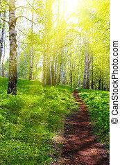 weg, op, zonnig, bos