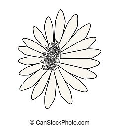 weiße blume, hintergrund, gänseblumen