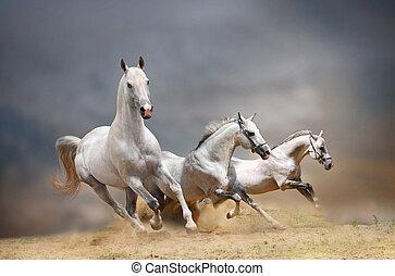 weiße pferde